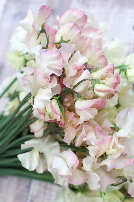 Gorgeous pink sweet pea flowers for inspiration