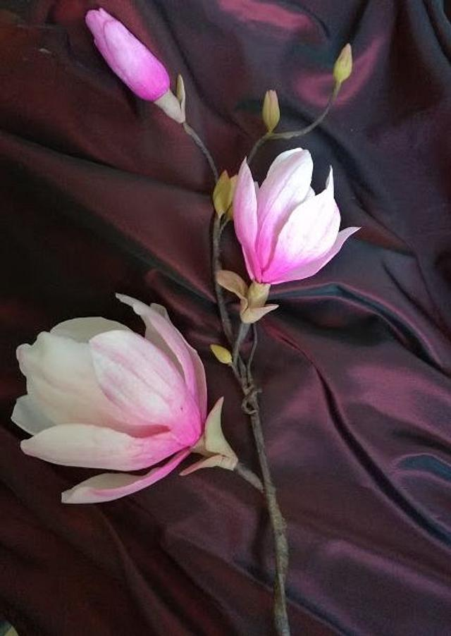 A branch of pink magnolia flowers and leaves