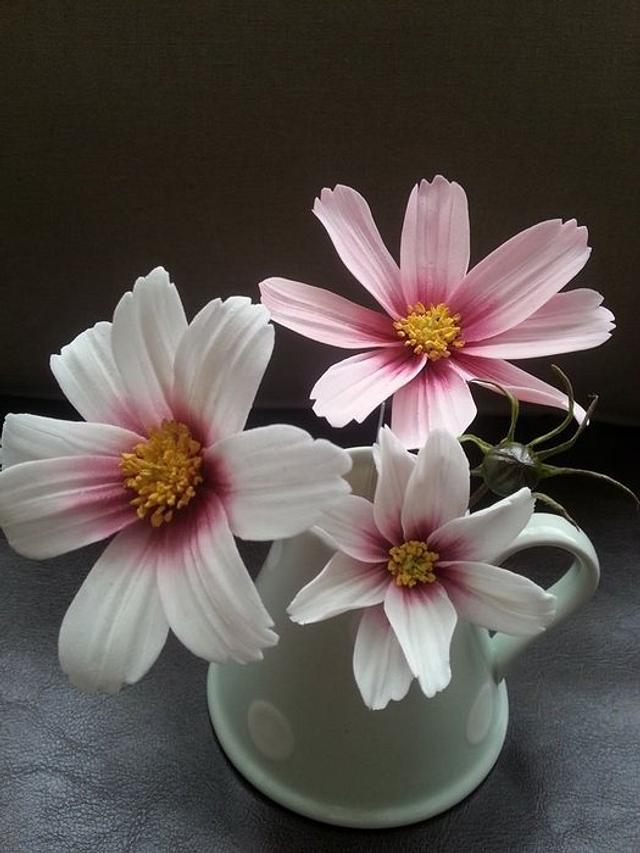 light white and pink flowers - Sugar Cosmos Flower tutorials