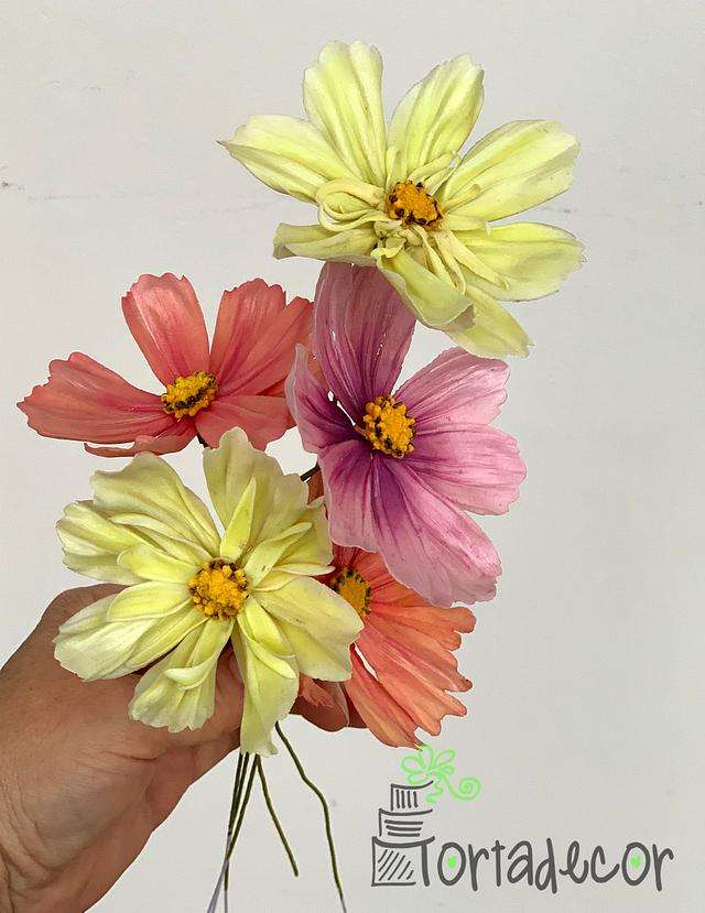 colorful pastel shades of handmade cosmos flowers with sugar