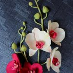 Moth Orchid Tutorials - red and white orchids with green branch
