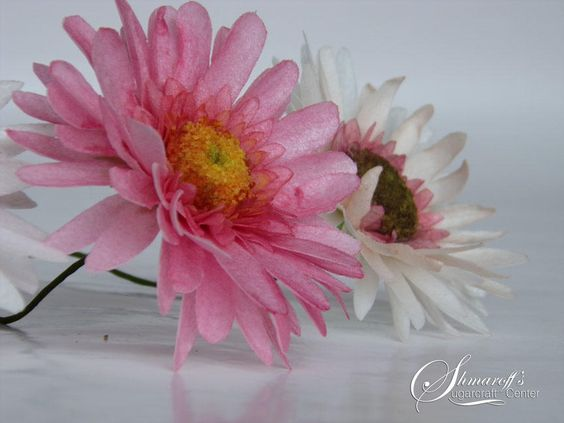 pink daisies of wafer paper for cakes
